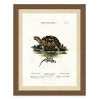 Tortoise II Framed Art Print