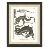 Reptile I Framed Art Print