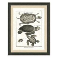Reptile II Framed Art Print