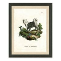Dog Study I Framed Art Print