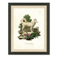 Dog Study II Framed Art Print