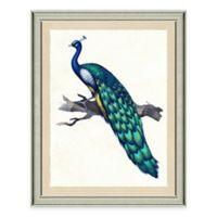 Peacock I Framed Art Print