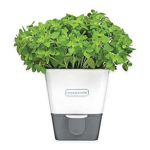 Herb Keeper Bed Bath And Beyond