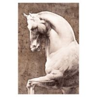 Pied Piper Creative Stoic White Horse 24-Inch x 36-Inch Canvas Wall Art