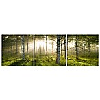 Elementem Photography Enchanted Forest 3-Panel Photographic Triptych Wall Art