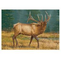 The Softer Side by Weather Guard™ 23-Inch x 36-Inch Numero Uno Kitchen Mat