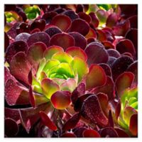 Burgundy Beauty All Weather Outdoor Canvas Wall Art