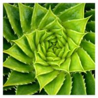 Spiral Aloe All Weather Outdoor Canvas Wall Art
