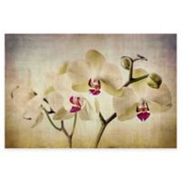 Marmont Hill Pale Orchids 45-Inch x 30-Inch Canvas Wall Art