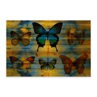 Parvez Taj Lepidoptera 36-Inch x 24-Inch Wood Wall Art