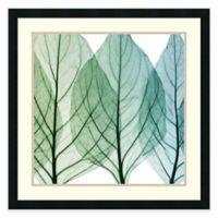 Steven N. Meyers Celosia Leaves II Framed Art Print