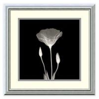 Poppy in Lace Framed Wall Art