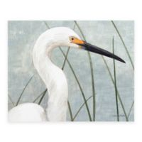 Snowy Egret Canvas Wall Art