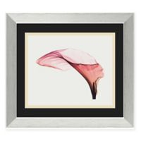 Steven N. Meyers Giant Calla Framed Art Print