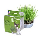 Van Ness Kitty Oat Garden Kit for Cats