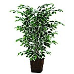 4-Foot Fabric Variegated Ficus Bush with Square Willow Basket