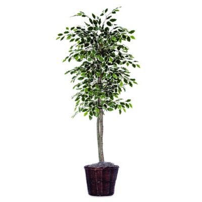 6foot fabric variegated ficus tree with brown rattan basket