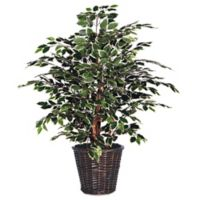 4-Foot Fabric Variegated Ficus Extra-Full Bush with Dark Brown Rattan Basket