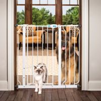 Carlson Extra Tall Pet Gate in White