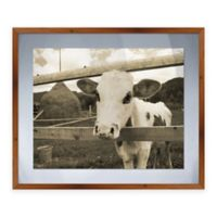 Peeking Calf Framed Graphic Art