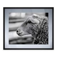Pro Tour Sheep Thoughts Framed Graphic Art