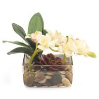 John-Richard 10-Inch Lazy Orchids Floral Arrangement in White