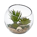 Glass Habitat Terrarium  with Faux Succulents