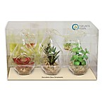 Hanging Succulent Plant in Glass (Set of 3)