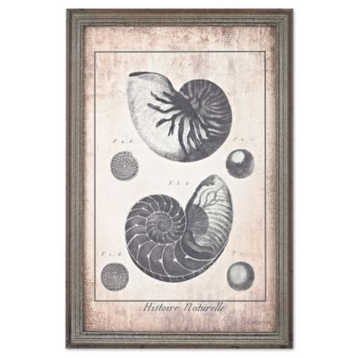 Shell Print Framed Wall Art In Blue