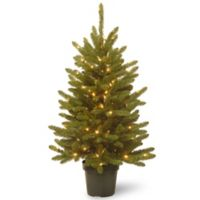 National Tree Company 4-Foot Pre-Lit Kensington Fir Christmas Tree with Clear Lights