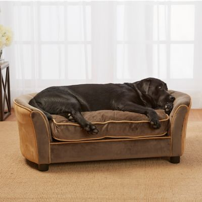 home sofa beds buy dog sofa from bed bath beyond