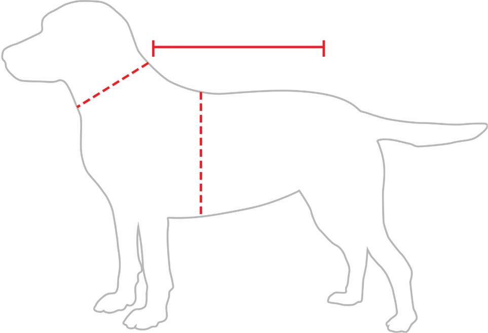 measurements dog