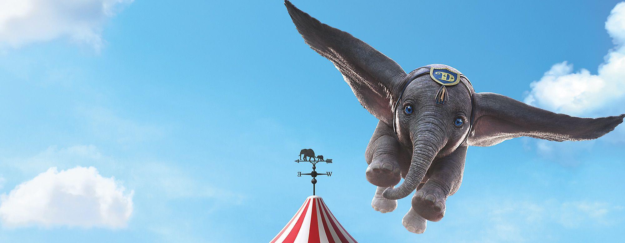 Admirez un éléphant s'envoler avec notre ébouriffante collection DÉCOUVRIR
