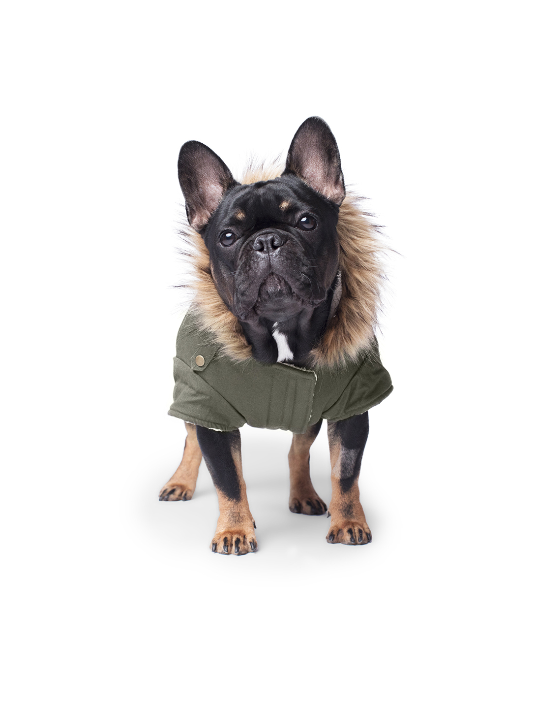 CANADA POOCH Medium Alaskan Army Dog Parka Gifts Green