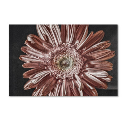 Trademark Fine Art Lois Bryan Silvery Pink GicleeCanvas Art