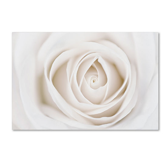 Trademark Fine Art Cora Niele White Rose Giclee Canvas Art