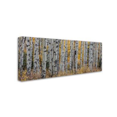 Trademark Fine Art Pierre Leclerc Aspen Trees Giclee Canvas Art