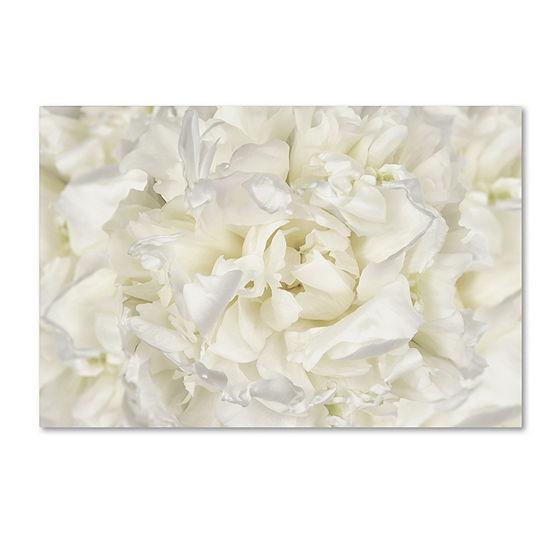 Trademark Fine Art Cora Niele White Peony Flower Giclee Canvas Art