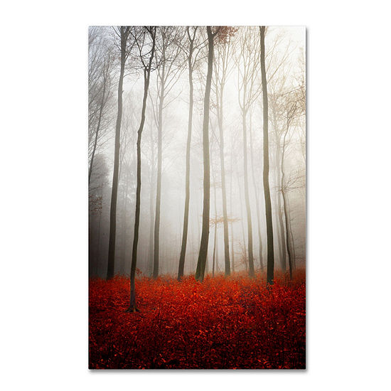Trademark Fine Art Philippe Sainte Laudy Leaflessgiclee Canvas Art
