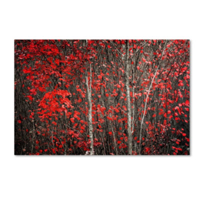 Trademark Fine Art Philippe Sainte-Laudy The HushBefore Winter Giclee Canvas Art