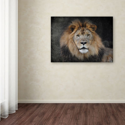 Trademark Fine Art Jai Johnson Male Lion Portrait1 Giclee Canvas Art