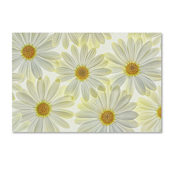 Trademark Fine Art Cora Niele Daisy Flowers Giclee Canvas Art