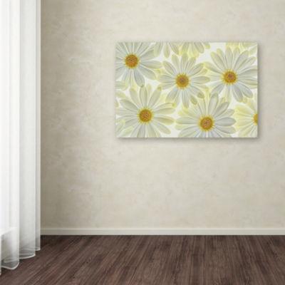 Trademark Fine Art Cora Niele Daisy Flowers GicleeCanvas Art