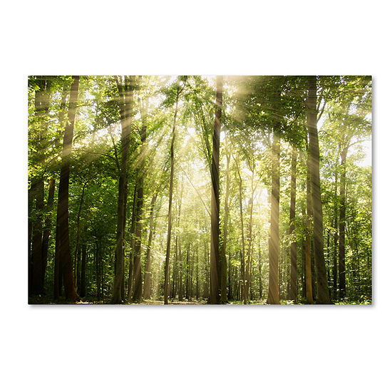 Trademark Fine Art PIPA Fine Art Sunrays Through Treetops Giclee Canvas Art