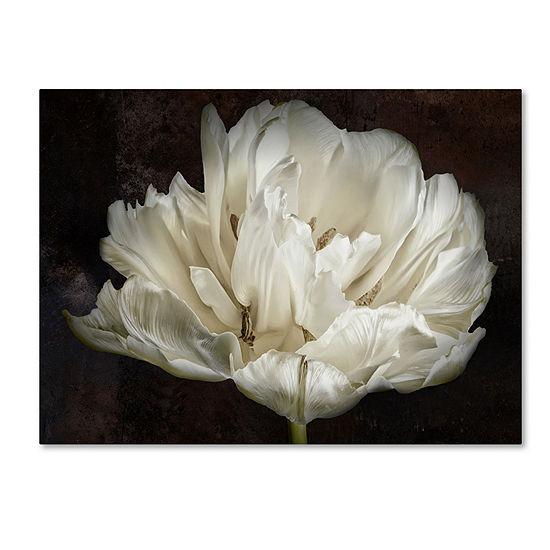Trademark Fine Art Cora Niele Double White Tulip Giclee Canvas Art