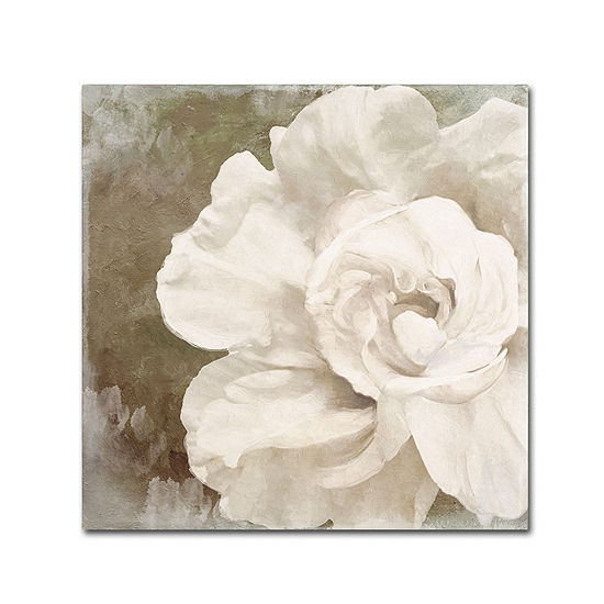 Trademark Fine Art Color Bakery Petals Impasto II Giclee Canvas Art