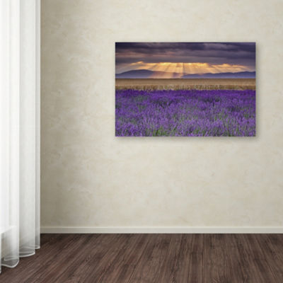 Trademark Fine Art Michael Blanchette PhotographyLavender Sunbeams Giclee Canvas Art