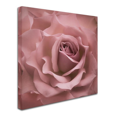 Trademark Fine Art Cora Niele Misty Rose Pink RoseGiclee Canvas Art