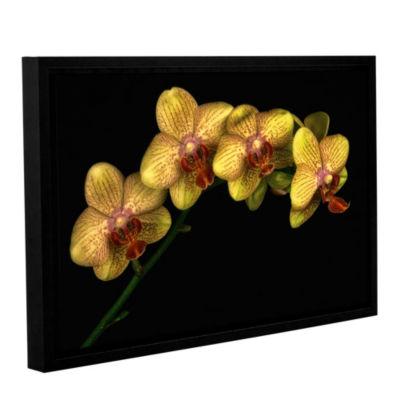 Phalaenopsis Maska Floater-Framed Gallery WrappedCanvas