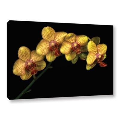 Phalaenopsis Maska Gallery Wrapped Canvas